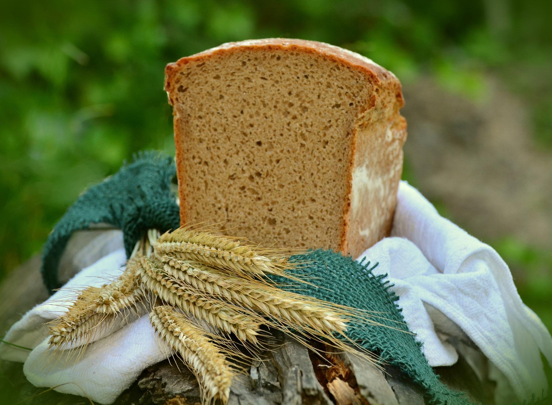 barley-1528172_1920